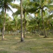 Agricultural Land For Sale in Off ECR Road, Chennai